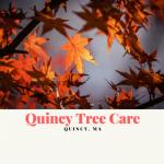 Quincy Tree Care Logo