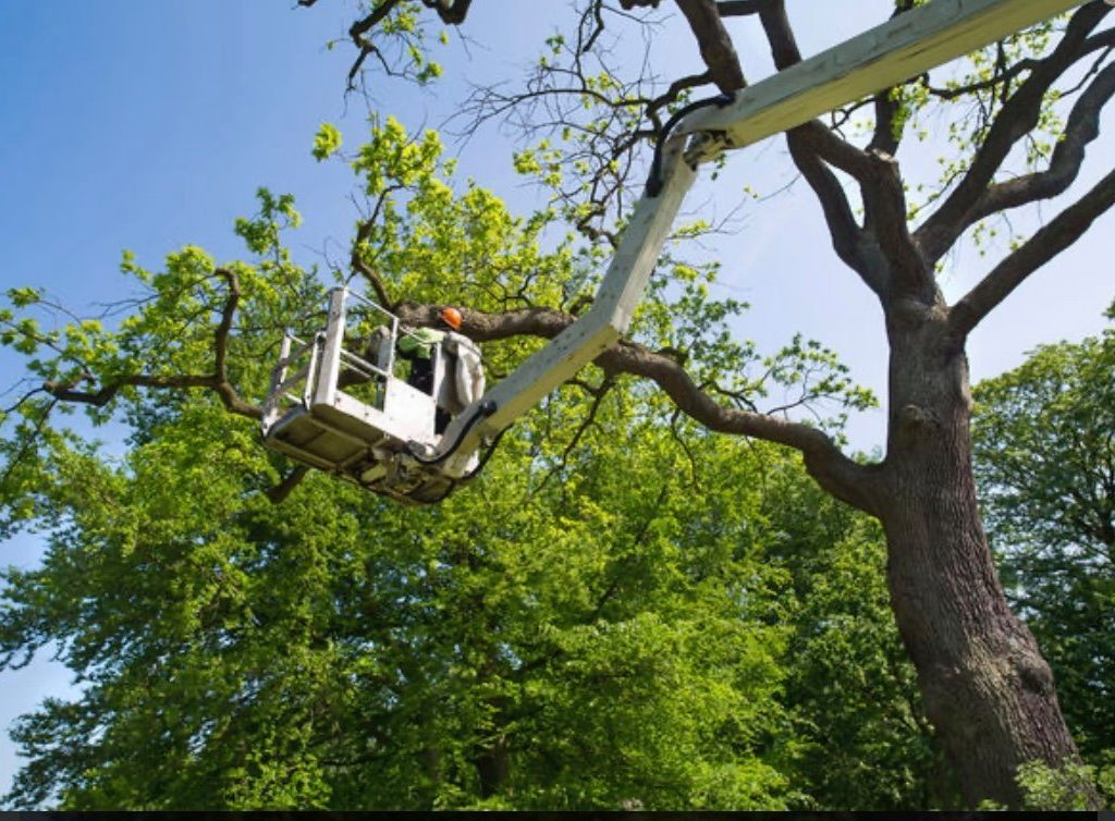 Tree Removal Quincy MA